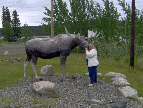 teslin moose